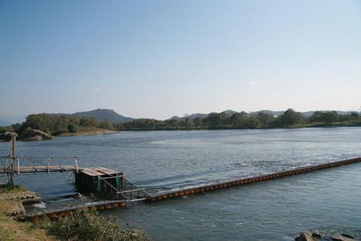 新潟県村上市三面川の落とし柵