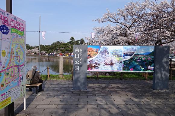 高田公園の穴場花見スポット